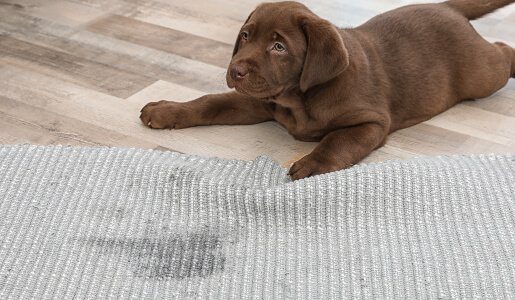 carpet odour cleaning perth