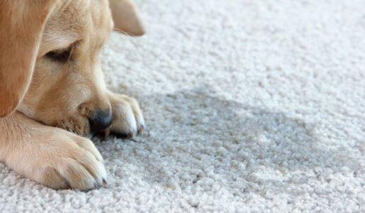 carpet odour removal brisbane