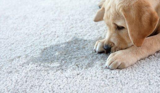 carpet odour cleaning ballarat