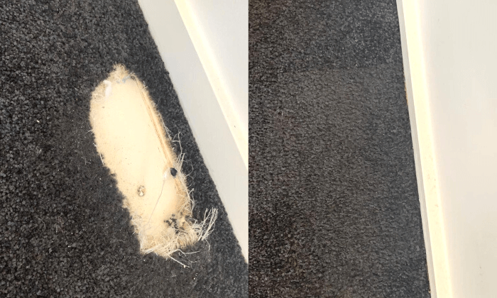 restored carpet in sydney before and after